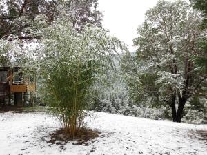 snowbamboo
